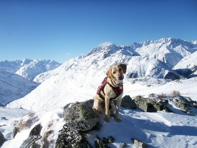 Zeke-avalanche-dog