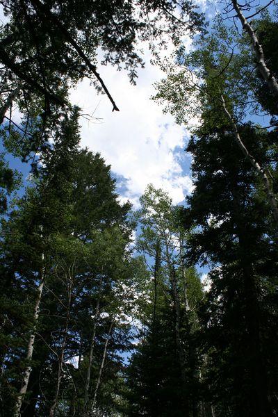 Tree-skyline