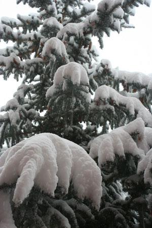 101220-snow